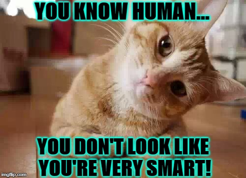 YOU KNOW HUMAN... YOU DON'T LOOK LIKE YOU'RE VERY SMART! | image tagged in the jerk | made w/ Imgflip meme maker