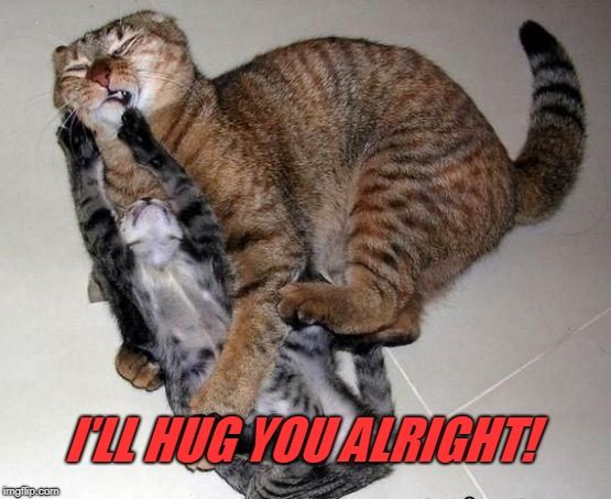 cats | I'LL HUG YOU ALRIGHT! | image tagged in cats | made w/ Imgflip meme maker