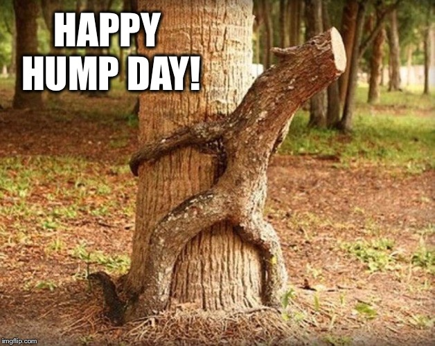 What day is today? | HAPPY HUMP DAY! | image tagged in wednesday,hump day,funny | made w/ Imgflip meme maker