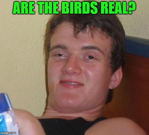 10 Guy Meme | ARE THE BIRDS REAL? | image tagged in memes,10 guy | made w/ Imgflip meme maker