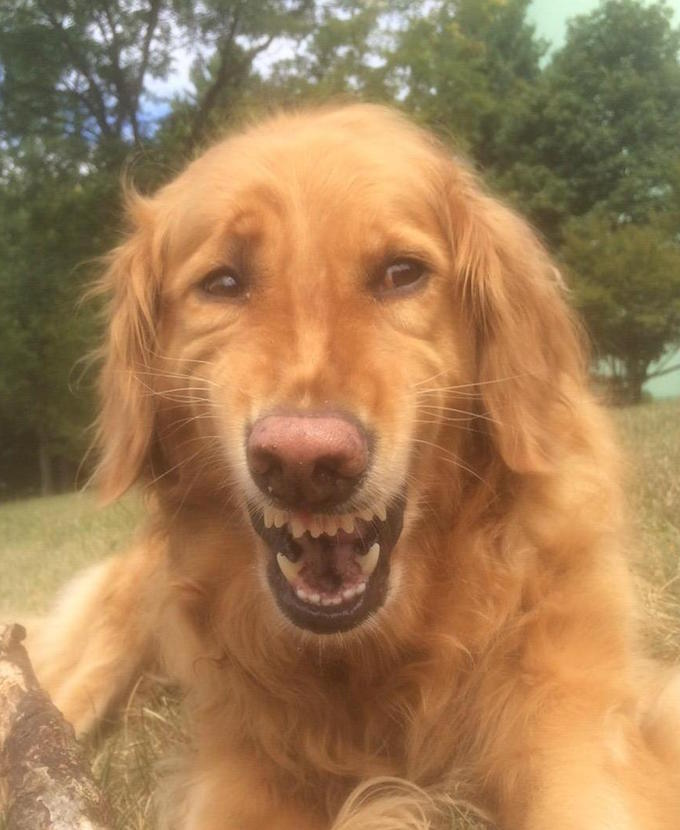 Fake smile dog Meme Template
