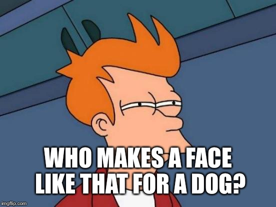 Futurama Fry Meme | WHO MAKES A FACE LIKE THAT FOR A DOG? | image tagged in memes,futurama fry | made w/ Imgflip meme maker
