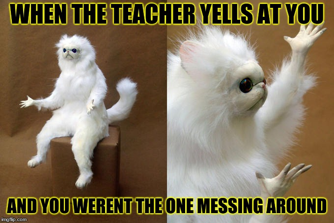 Persian Cat Room Guardian Meme | WHEN THE TEACHER YELLS AT YOU AND YOU WERENT THE ONE MESSING AROUND | image tagged in memes,persian cat room guardian | made w/ Imgflip meme maker