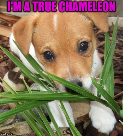 I'M A TRUE CHAMELEON | made w/ Imgflip meme maker