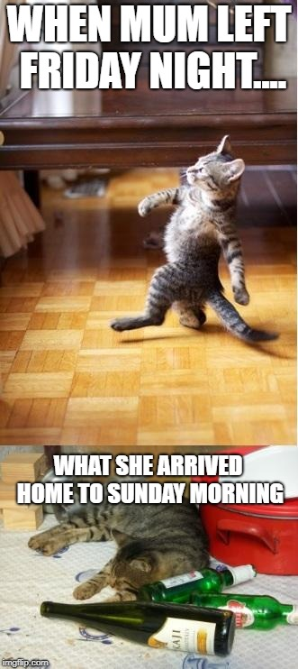 Party cat | WHEN MUM LEFT FRIDAY NIGHT.... WHAT SHE ARRIVED HOME TO SUNDAY MORNING | image tagged in party cat | made w/ Imgflip meme maker