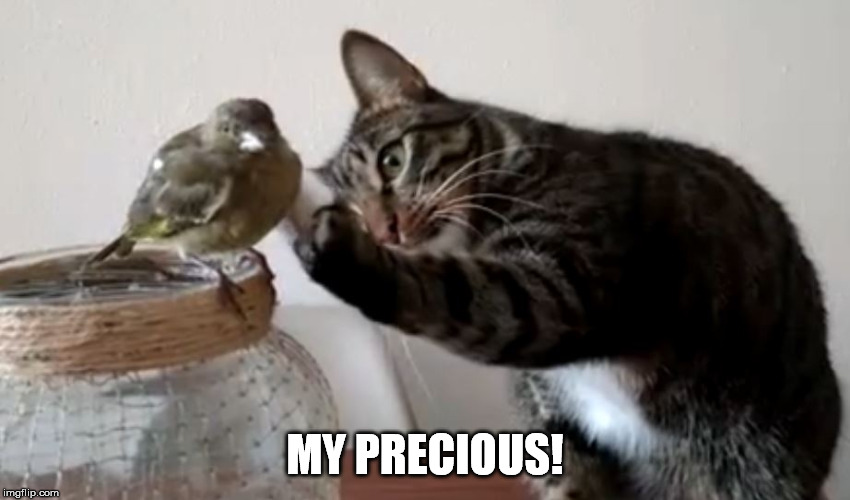 MY PRECIOUS! | made w/ Imgflip meme maker