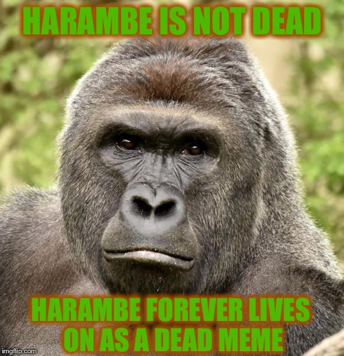 Har | HARAMBE IS NOT DEAD HARAMBE FOREVER LIVES ON AS A DEAD MEME | image tagged in har | made w/ Imgflip meme maker