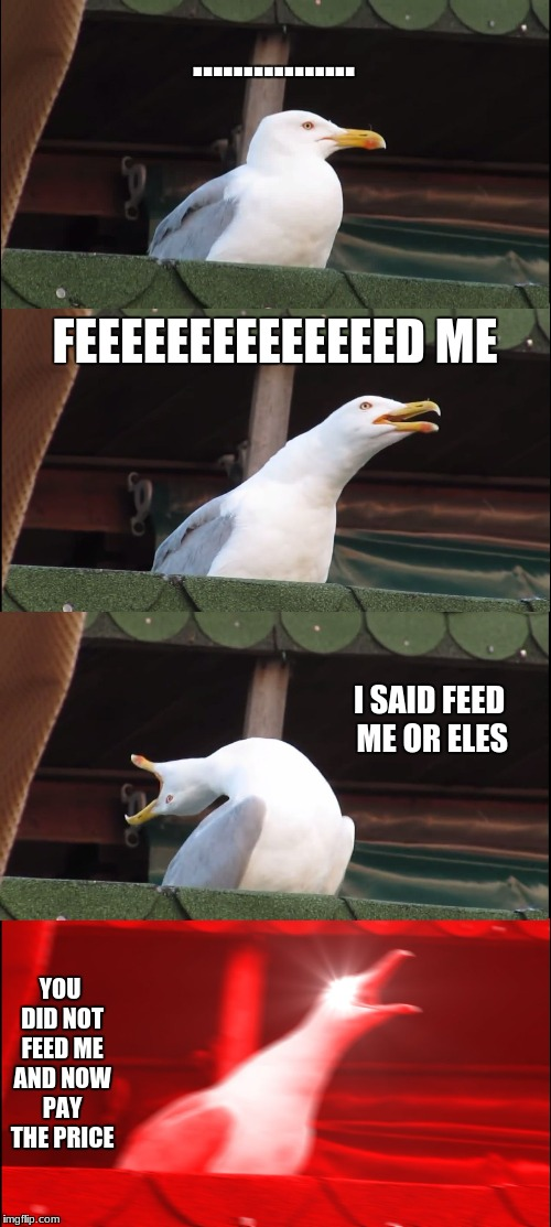 Inhaling Seagull Meme | ................ FEEEEEEEEEEEEEED ME I SAID FEED ME OR ELES YOU DID NOT FEED ME AND NOW PAY THE PRICE | image tagged in memes,inhaling seagull | made w/ Imgflip meme maker