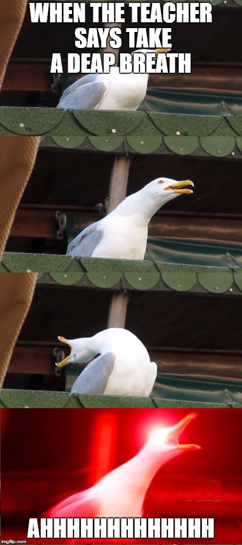 WHEN THE TEACHER SAYS TAKE A DEAP BREATH AHHHHHHHHHHHHH | image tagged in seagull inhales | made w/ Imgflip meme maker