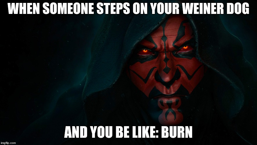 Mr.Fozzil | WHEN SOMEONE STEPS ON YOUR WEINER DOG AND YOU BE LIKE: BURN | image tagged in darth maul | made w/ Imgflip meme maker
