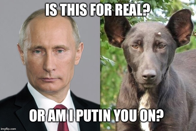 It's real  | IS THIS FOR REAL? OR AM I PUTIN YOU ON? | image tagged in memes | made w/ Imgflip meme maker