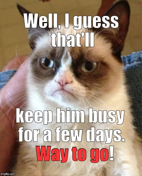 Grumpy Cat Meme | Well, I guess that'll keep him busy for a few days.   Way to go! Way to go | image tagged in memes,grumpy cat | made w/ Imgflip meme maker