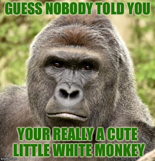 Har | GUESS NOBODY TOLD YOU YOUR REALLY A CUTE LITTLE WHITE MONKEY | image tagged in har | made w/ Imgflip meme maker