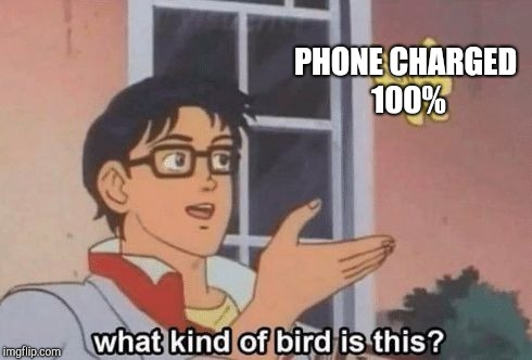 What kind of bird is this? | PHONE CHARGED 100% | image tagged in what kind of bird is this | made w/ Imgflip meme maker
