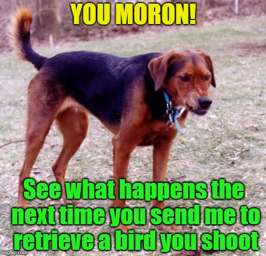 YOU MORON! See what happens the next time you send me to retrieve a bird you shoot | made w/ Imgflip meme maker