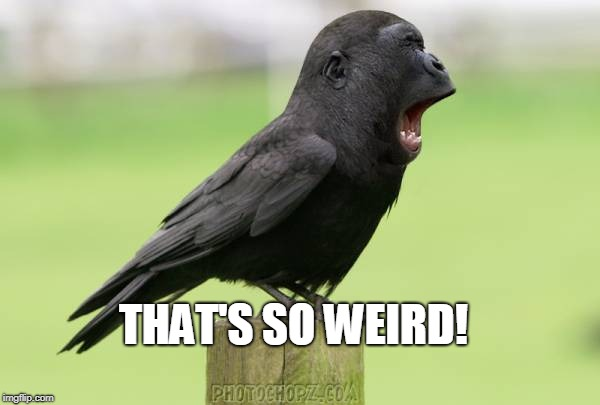 animals | THAT'S SO WEIRD! | image tagged in animals | made w/ Imgflip meme maker