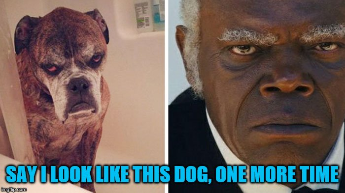 SAY I LOOK LIKE THIS DOG, ONE MORE TIME | made w/ Imgflip meme maker