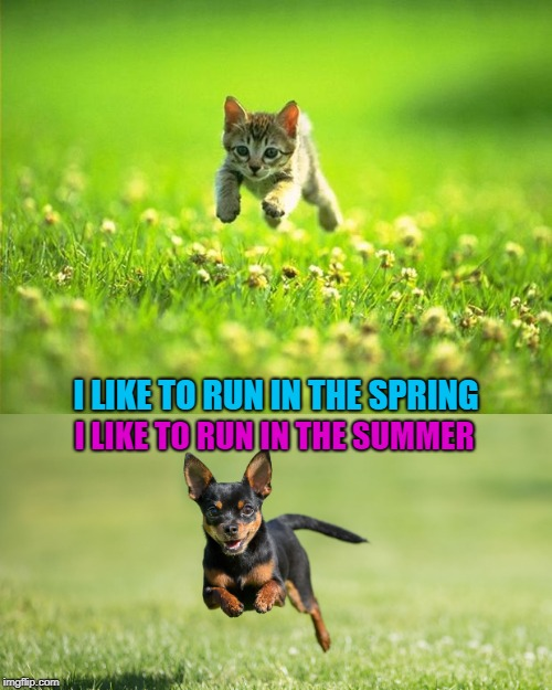 We both run | I LIKE TO RUN IN THE SPRING I LIKE TO RUN IN THE SUMMER | image tagged in cute,funny,chihuahua,kitten | made w/ Imgflip meme maker