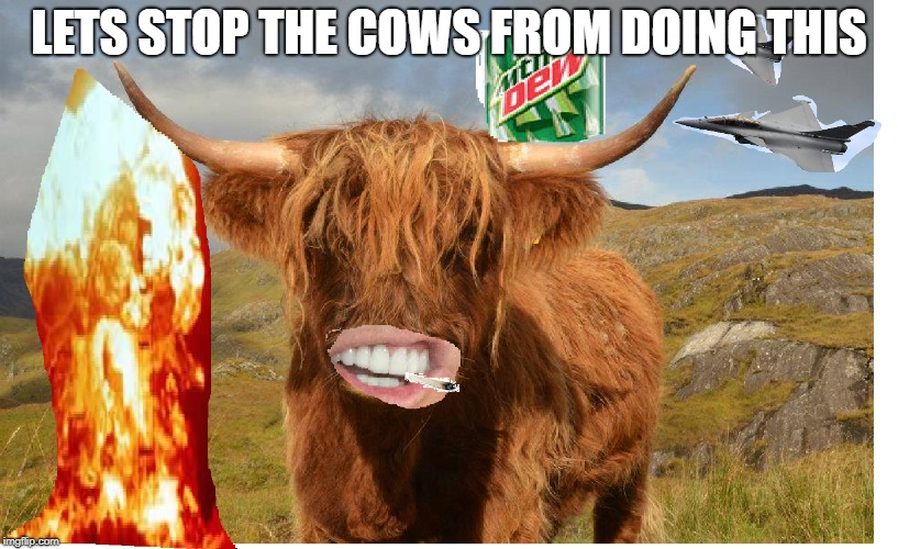 Cows are aliens spy's  | LETS STOP THE COWS FROM DOING THIS | image tagged in do not trust a cow | made w/ Imgflip meme maker