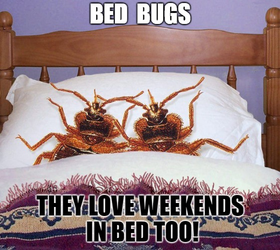 Bed Bug Weekend | BED  BUGS THEY LOVE WEEKENDS IN BED TOO! | image tagged in bed bugs actually in bed,bed bugs,weekend,long weekend,bed bugs bed,couple in bed | made w/ Imgflip meme maker