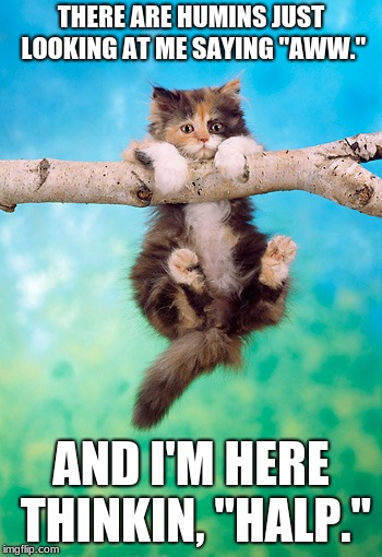 "Halp | THERE ARE HUMINS JUST LOOKING AT ME SAYING ""AWW."" AND I'M HERE THINKIN, ""HALP."" 