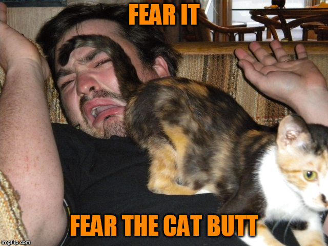 FEAR IT FEAR THE CAT BUTT | made w/ Imgflip meme maker
