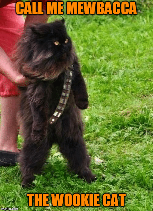 CALL ME MEWBACCA THE WOOKIE CAT | made w/ Imgflip meme maker