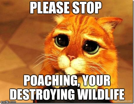 Puss in Boots | PLEASE STOP POACHING, YOUR DESTROYING WILDLIFE | image tagged in puss in boots | made w/ Imgflip meme maker