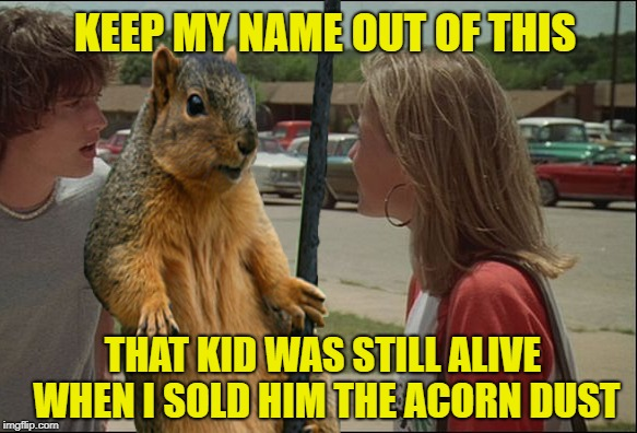 Squirrel Dealer  | KEEP MY NAME OUT OF THIS THAT KID WAS STILL ALIVE WHEN I SOLD HIM THE ACORN DUST | image tagged in funny memes,squirrel,drugs | made w/ Imgflip meme maker