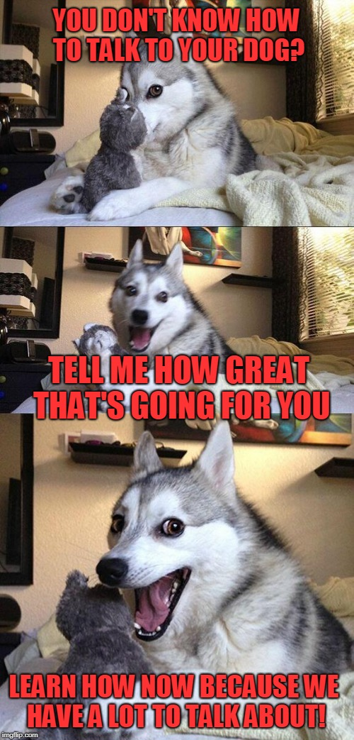 Bad Pun Dog Meme | YOU DON'T KNOW HOW TO TALK TO YOUR DOG? TELL ME HOW GREAT THAT'S GOING FOR YOU LEARN HOW NOW BECAUSE WE HAVE A LOT TO TALK ABOUT! | image tagged in memes,bad pun dog | made w/ Imgflip meme maker