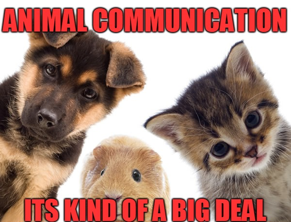ANIMAL COMMUNICATION ITS KIND OF A BIG DEAL | image tagged in pets | made w/ Imgflip meme maker