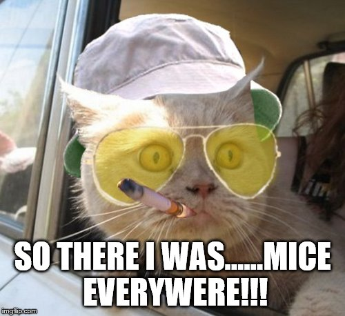 Fear And Loathing Cat | SO THERE I WAS......MICE EVERYWERE!!! | image tagged in memes,fear and loathing cat | made w/ Imgflip meme maker