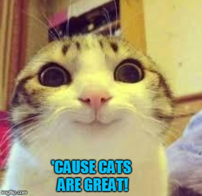 'CAUSE CATS ARE GREAT! | made w/ Imgflip meme maker