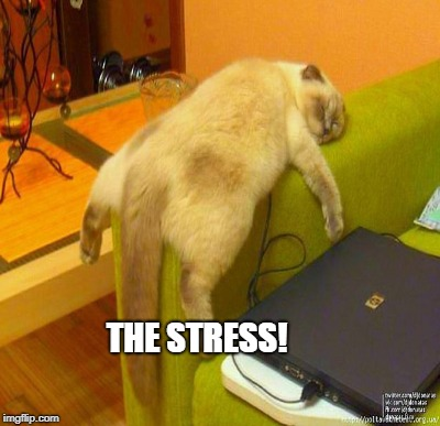 THE STRESS! | made w/ Imgflip meme maker