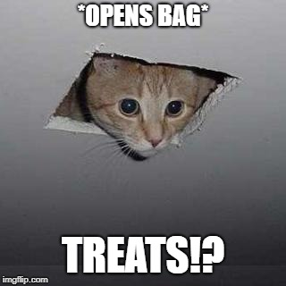 Ceiling Cat Meme | *OPENS BAG* TREATS!? | image tagged in memes,ceiling cat | made w/ Imgflip meme maker
