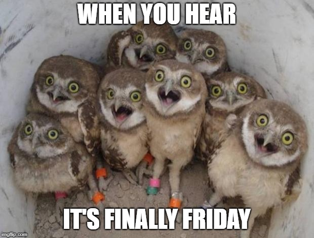 FRIDAY | WHEN YOU HEAR IT'S FINALLY FRIDAY | image tagged in excited owls,random,blah,hnnghh,whakaushdiusd | made w/ Imgflip meme maker