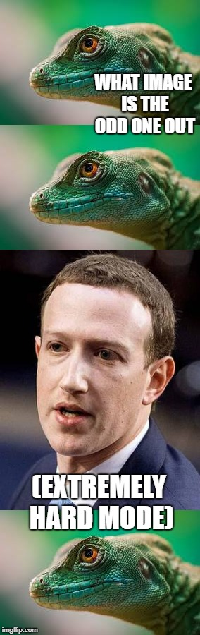 They look exactly the same! | WHAT IMAGE IS THE ODD ONE OUT (EXTREMELY HARD MODE) | image tagged in mark zuckerberg,animals,lizard,facebook,memes | made w/ Imgflip meme maker