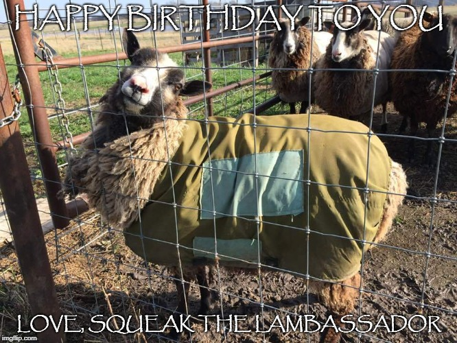 Squeak birthday | HAPPY BIRTHDAY TO YOU LOVE, SQUEAK THE LAMBASSADOR | image tagged in sheep,happy birthday | made w/ Imgflip meme maker