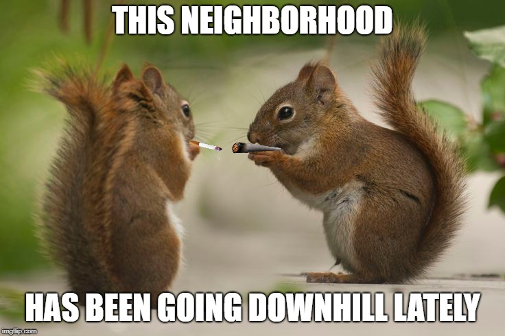 THIS NEIGHBORHOOD HAS BEEN GOING DOWNHILL LATELY | made w/ Imgflip meme maker
