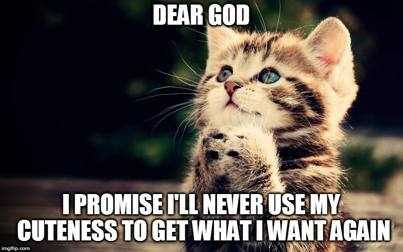 Dear God | DEAR GOD I PROMISE I'LL NEVER USE MY CUTENESS TO GET WHAT I WANT AGAIN | image tagged in dear god | made w/ Imgflip meme maker