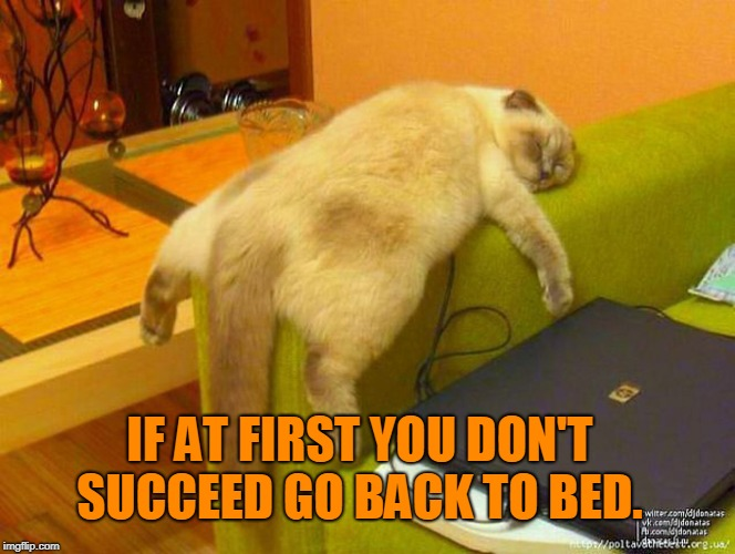 sleeping cat | IF AT FIRST YOU DON'T SUCCEED GO BACK TO BED. | image tagged in sleeping cat | made w/ Imgflip meme maker