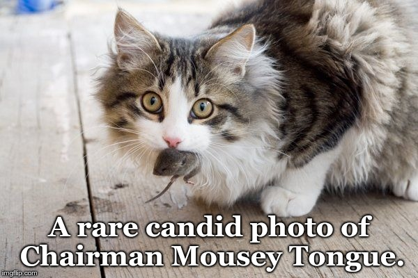 A rare candid photo of Chairman Mousey Tongue. | image tagged in cat with mouse in mouth | made w/ Imgflip meme maker
