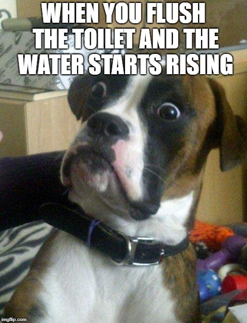 Blankie the Shocked Dog | WHEN YOU FLUSH THE TOILET AND THE WATER STARTS RISING | image tagged in blankie the shocked dog | made w/ Imgflip meme maker