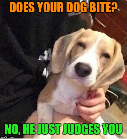 Watch dog | DOES YOUR DOG BITE? NO, HE JUST JUDGES YOU | image tagged in funny dog memes,judgemental,dog,funny memes | made w/ Imgflip meme maker
