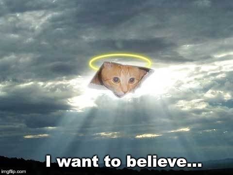 I want to believe... | image tagged in ceiling cat in the clouds | made w/ Imgflip meme maker
