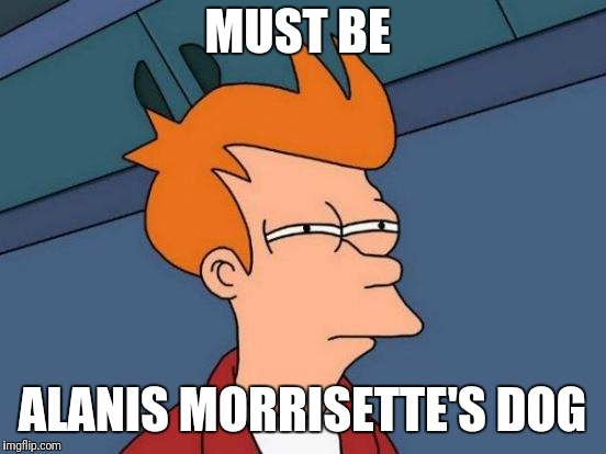 Futurama Fry Meme | MUST BE ALANIS MORRISETTE'S DOG | image tagged in memes,futurama fry | made w/ Imgflip meme maker