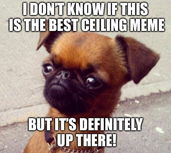 Crumpet | I DON'T KNOW IF THIS IS THE BEST CEILING MEME BUT IT'S DEFINITELY UP THERE! | image tagged in crumpet | made w/ Imgflip meme maker