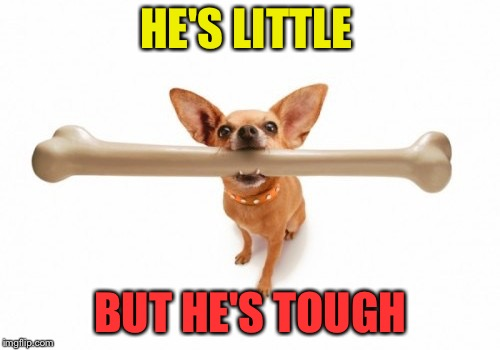 HE'S LITTLE BUT HE'S TOUGH | made w/ Imgflip meme maker