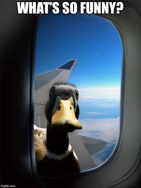Let Me In Duck | WHAT'S SO FUNNY? | image tagged in let me in duck | made w/ Imgflip meme maker
