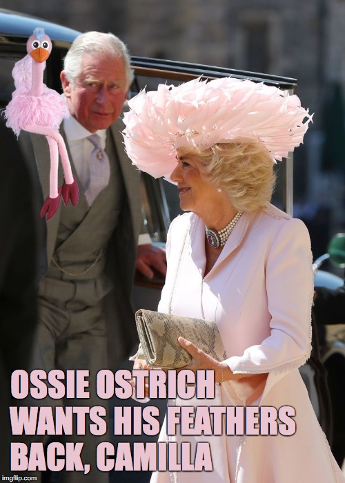 Ossie Ostrich wants his feathers back Camilla | OSSIE OSTRICH WANTS HIS FEATHERS BACK, CAMILLA | image tagged in royal wedding,harry  meghan,ossie ostrich,meme,camilla,prince charles | made w/ Imgflip meme maker